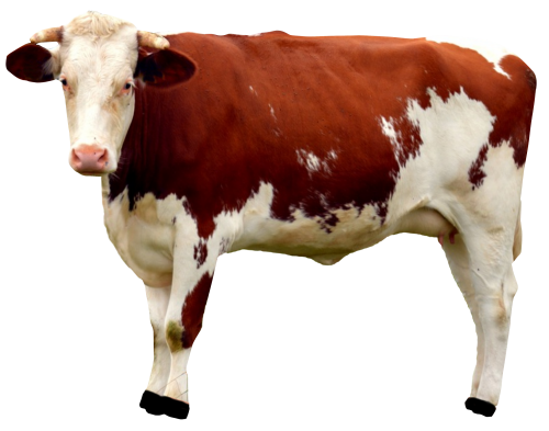 Cow Png - Cow PNG Transparent Image