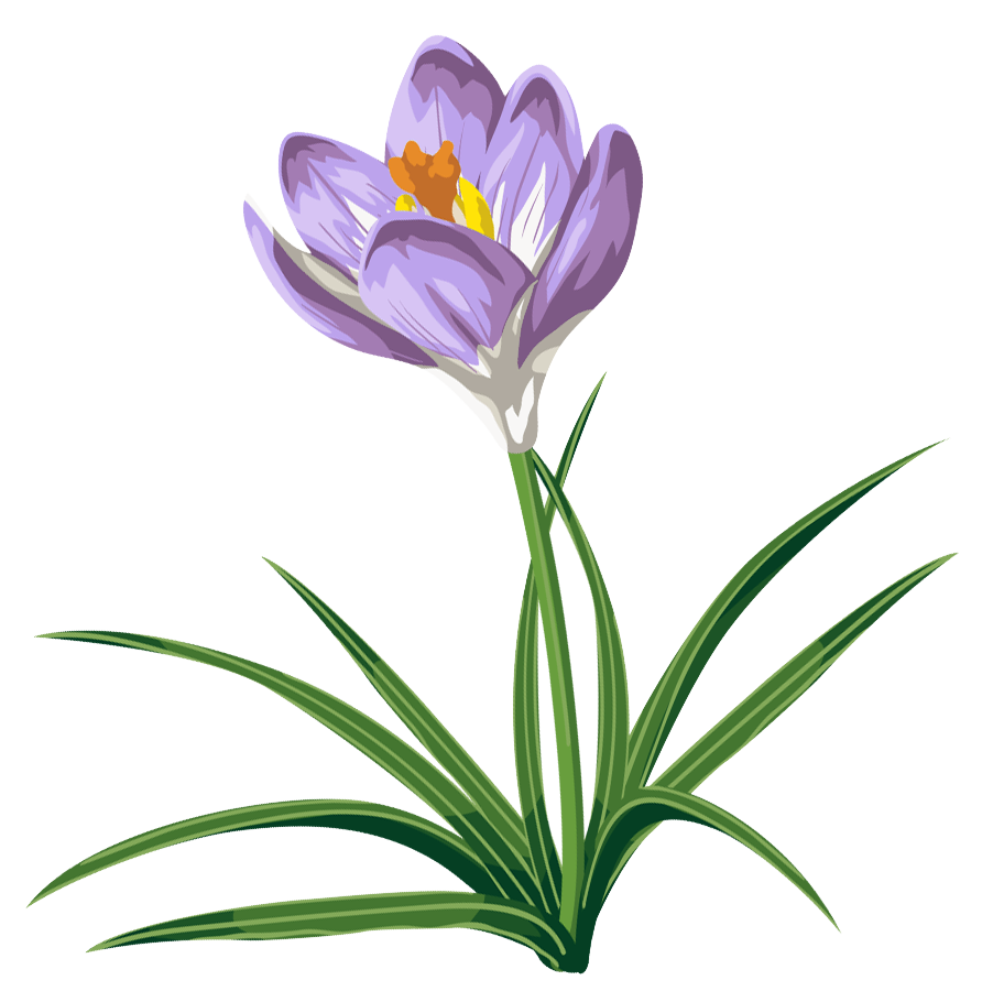 Spring Crocus Png - Crocus PNG Clipart Picture | Gallery Yopriceville - High-Quality ...