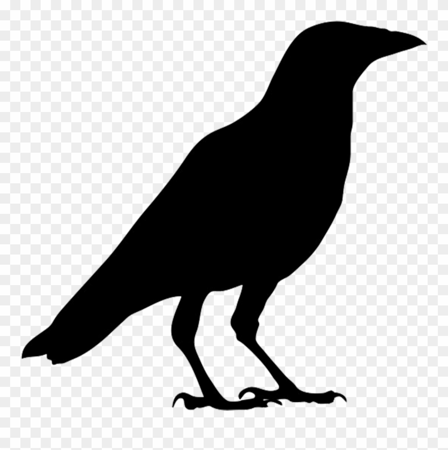 Crow Outline Png - Crow Clipart Clipartfox - Outline Picture Of Crow - Png Download ...