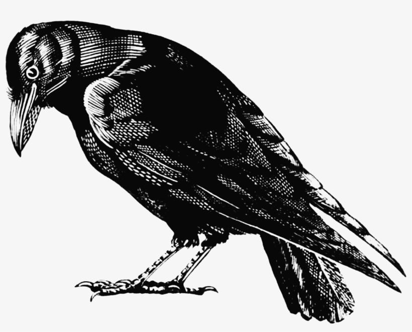 Crow Outline Png - Crow - Crow Png Transparent - Free Transparent PNG Download - PNGkey