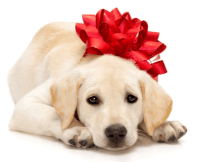Christmas Puppy Png & Free Christmas Puppy.png Transparent Images #53963 - PNGio