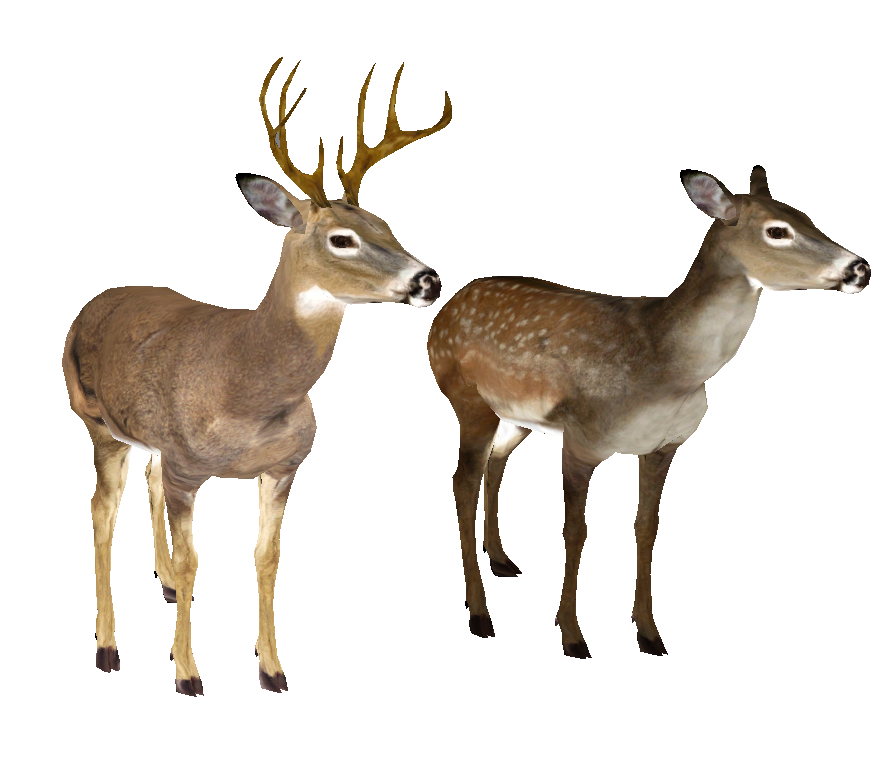Whitetail Deer Png - deer-free-PNG-transparent-background-images-free-download-clipart ...