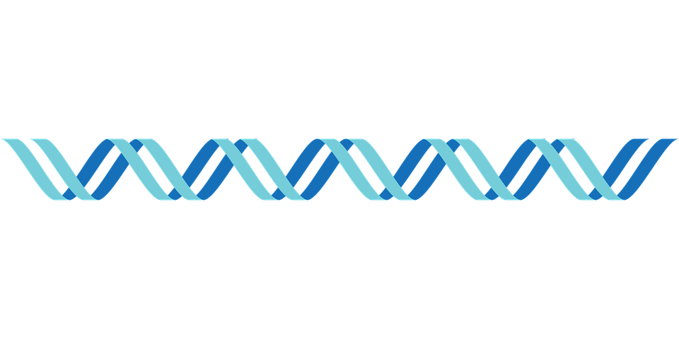 Stranded Png - Dna Icon Double Stranded - Free vector graphic on Pixabay