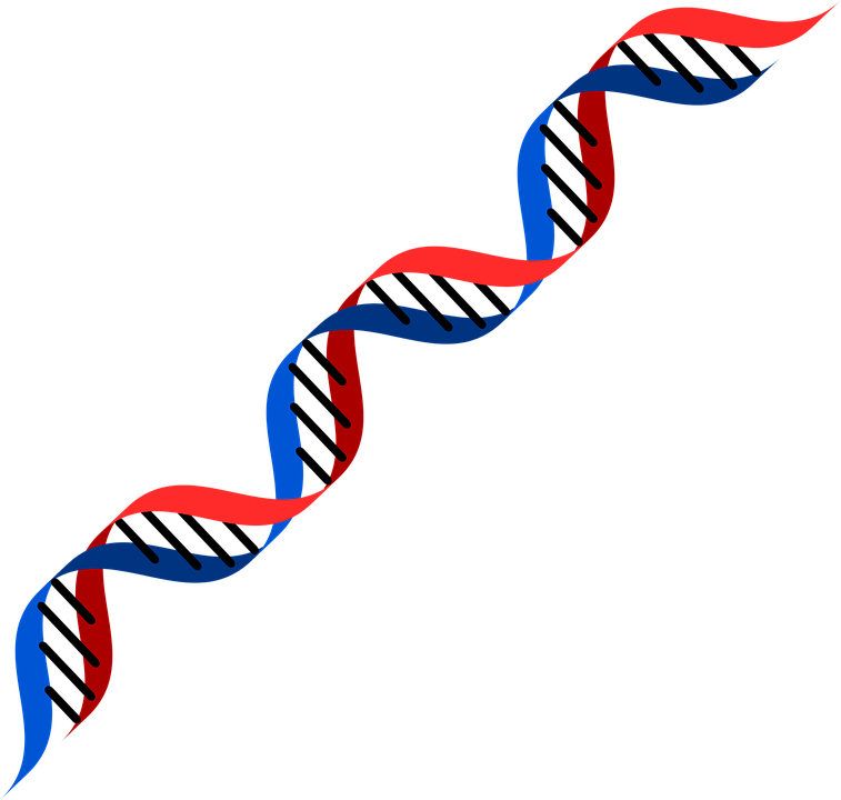 Red And Blue Png - Dna Red Blue - Free vector graphic on Pixabay