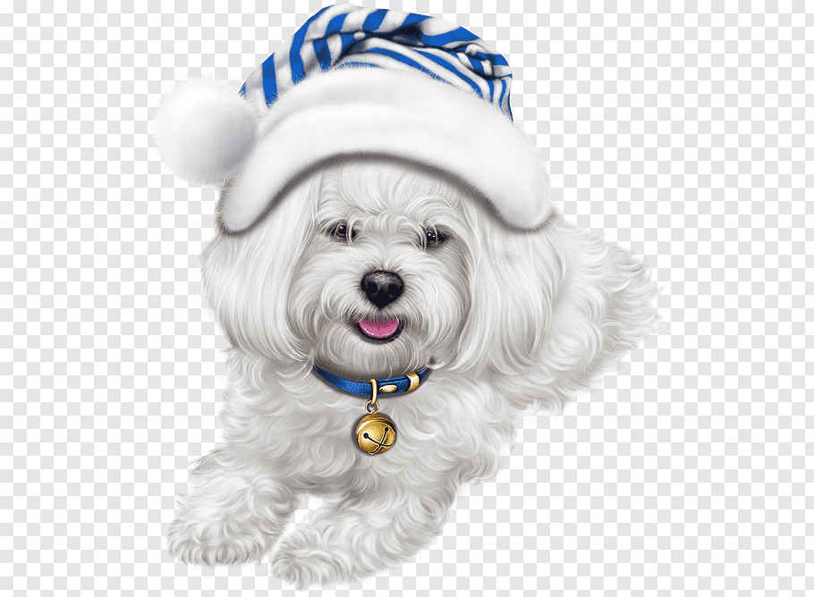 Bichon Havanese Png - Dog maltese dog breed bichon havanese, Puppy, Companion Dog PNG ...
