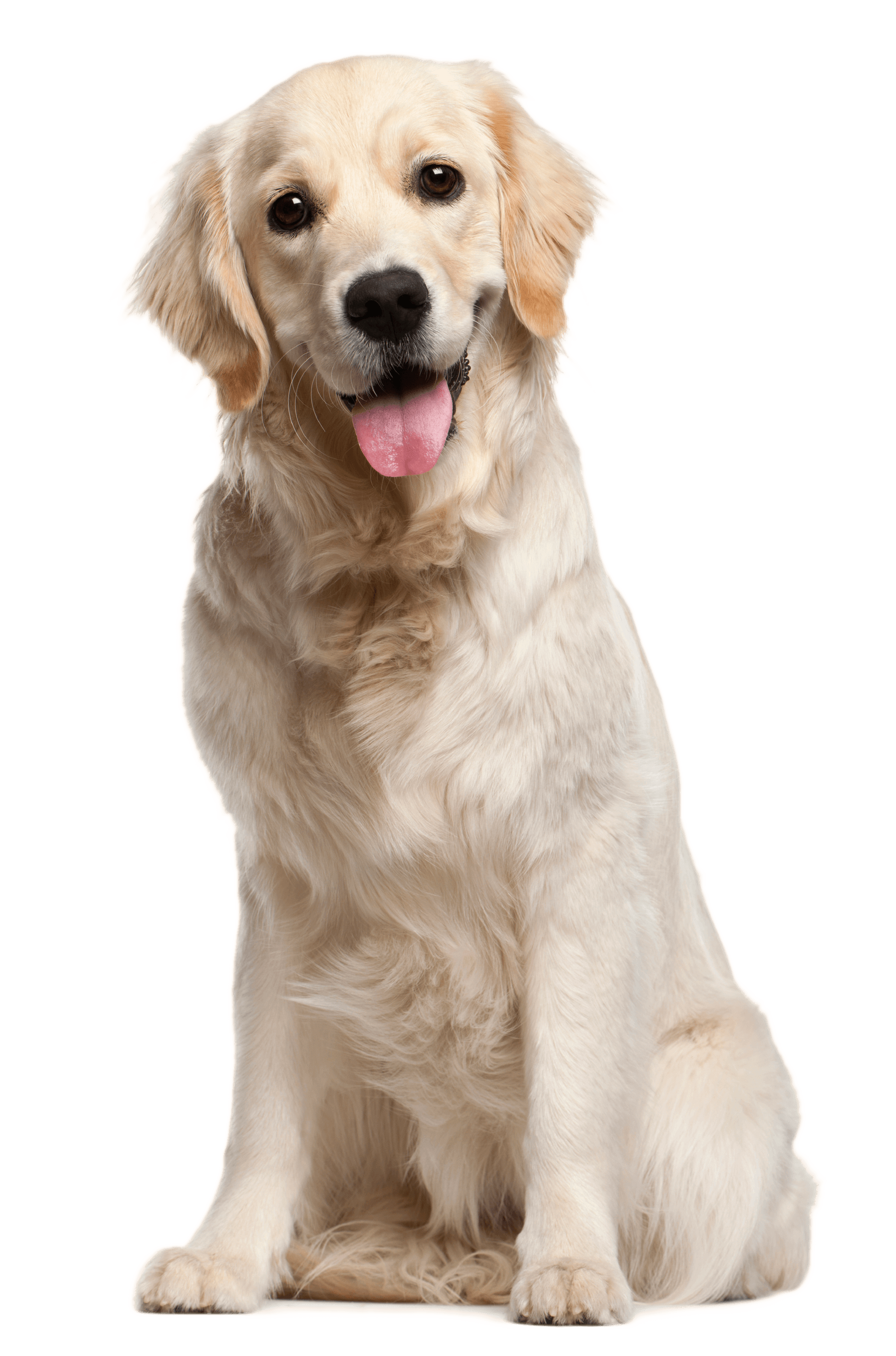 Dog Png - Dog PNG File