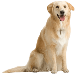 Dog Png - Dog Png Image Picture Download Dogs PNG Image