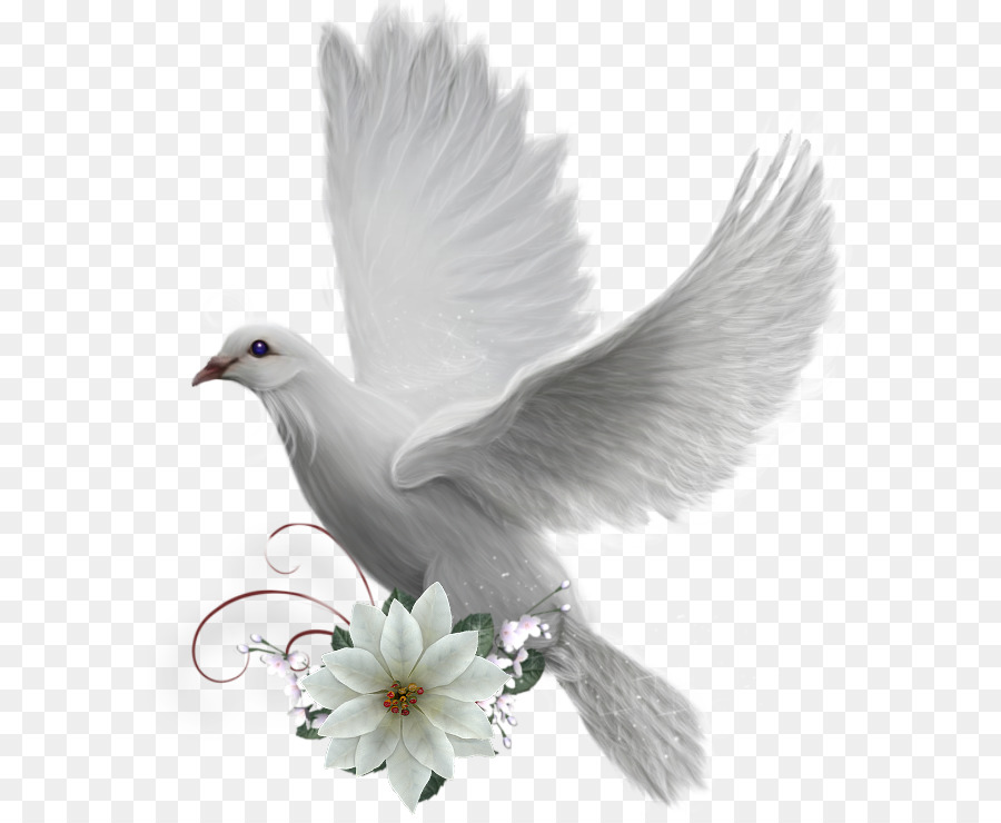 Colombe Png - Dove Bird png download - 638*735 - Free Transparent Colombe png ...