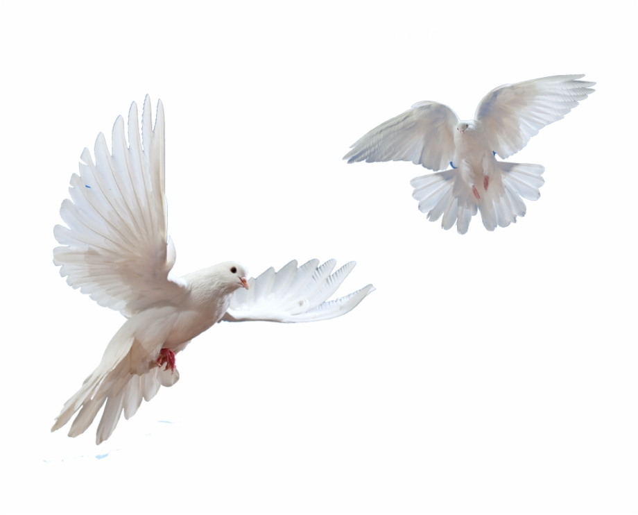 Dove Flying Png - Doves Flying In Sky Png - Bird Moodboard Pngs, Transparent Png ...