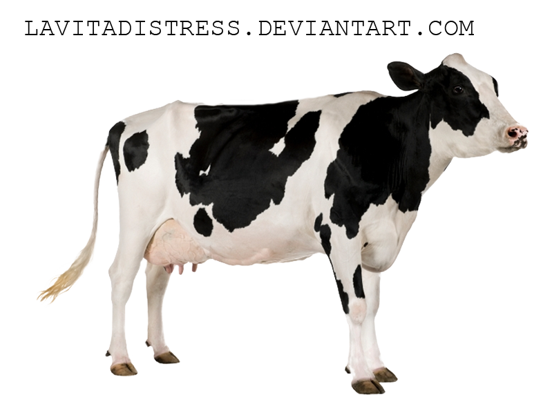 Number 2 And Cow Png - Download Cow PNG 2 - Free Transparent PNG Images, Icons and Clip Arts