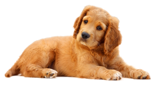 Dog Png - Download Dog PNG image