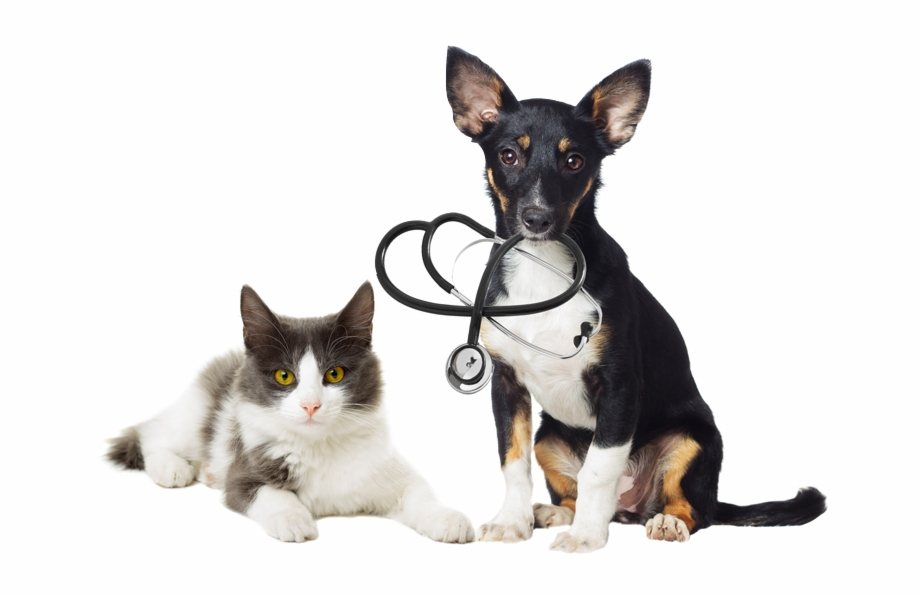 Download Dogs And Cats Png Transparent 1516572 Png Images Pngio