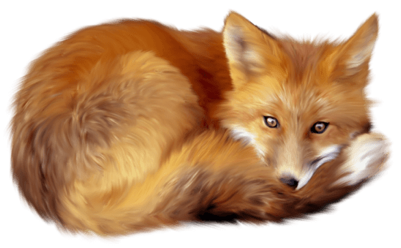 Fox Png - Download