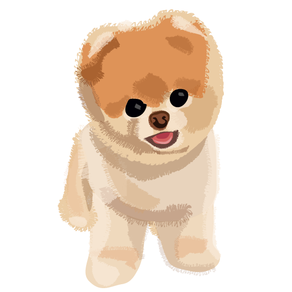 Boo The Dog Png - Download Free png Boo Dog PNG Transparent Image - DLPNG.com