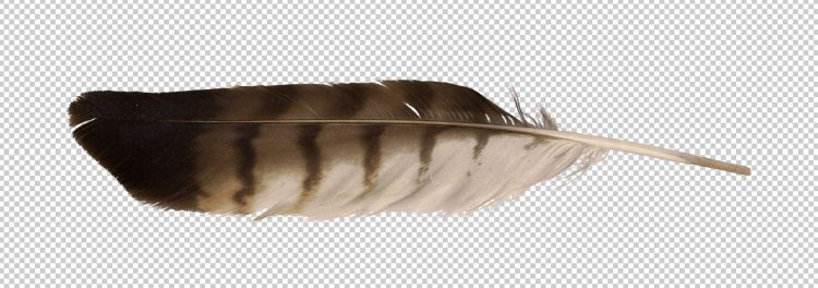Eagle Feather Png - Download Free png precut image eagle feather | CUT&PASTE ...