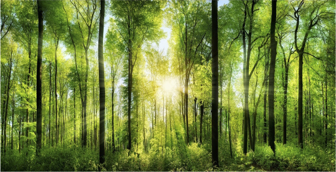 Forest Pngs - Download Free png The Forest Png (100+ images in Collection) Page ...