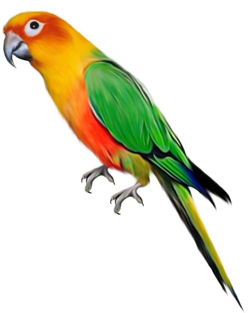 Parrots Png - Download Full Size
