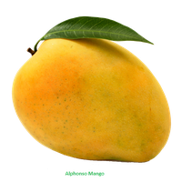Png Of Mango - Download Mango Free PNG photo images and clipart | FreePNGImg