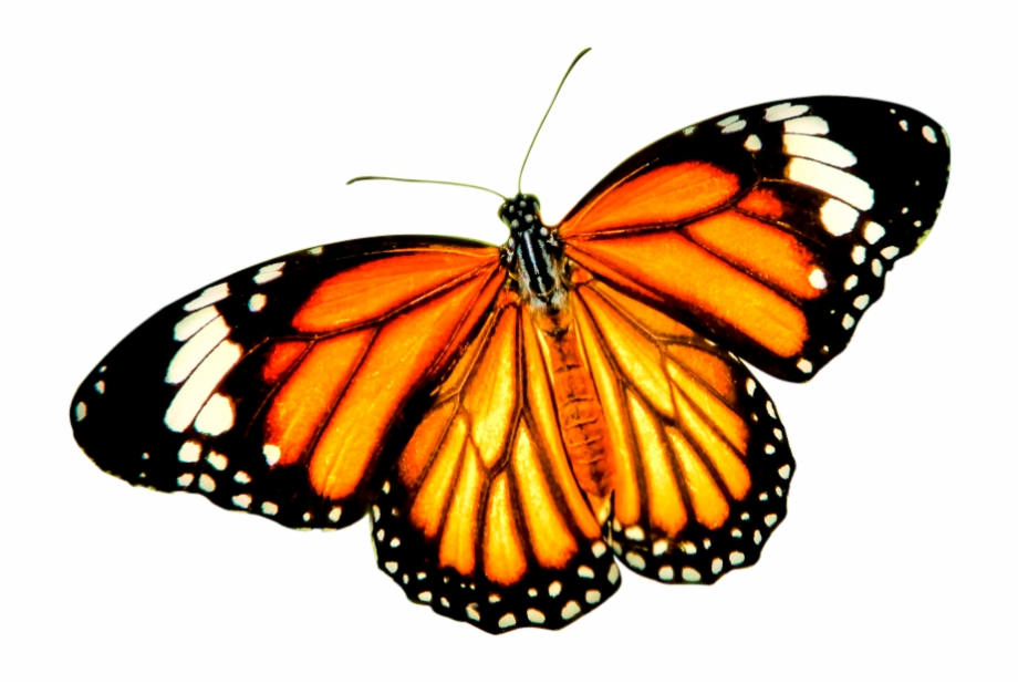 Butterfly Transparent Background - Download Png Balloon Image - Orange Butterfly Transparent ...
