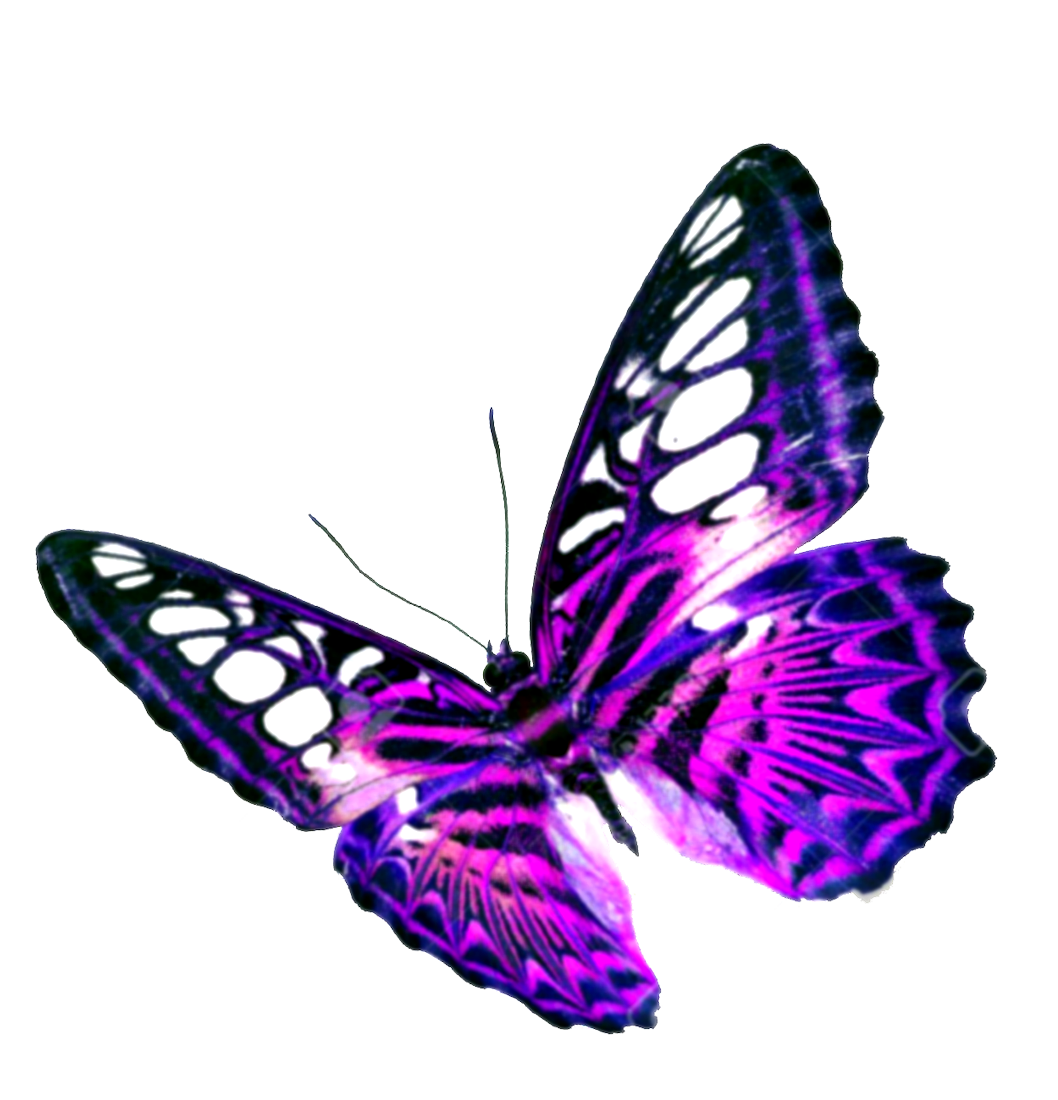 Butterfly Transparent Background - Download Purple Butterfly Transparent Background HQ PNG Image ...
