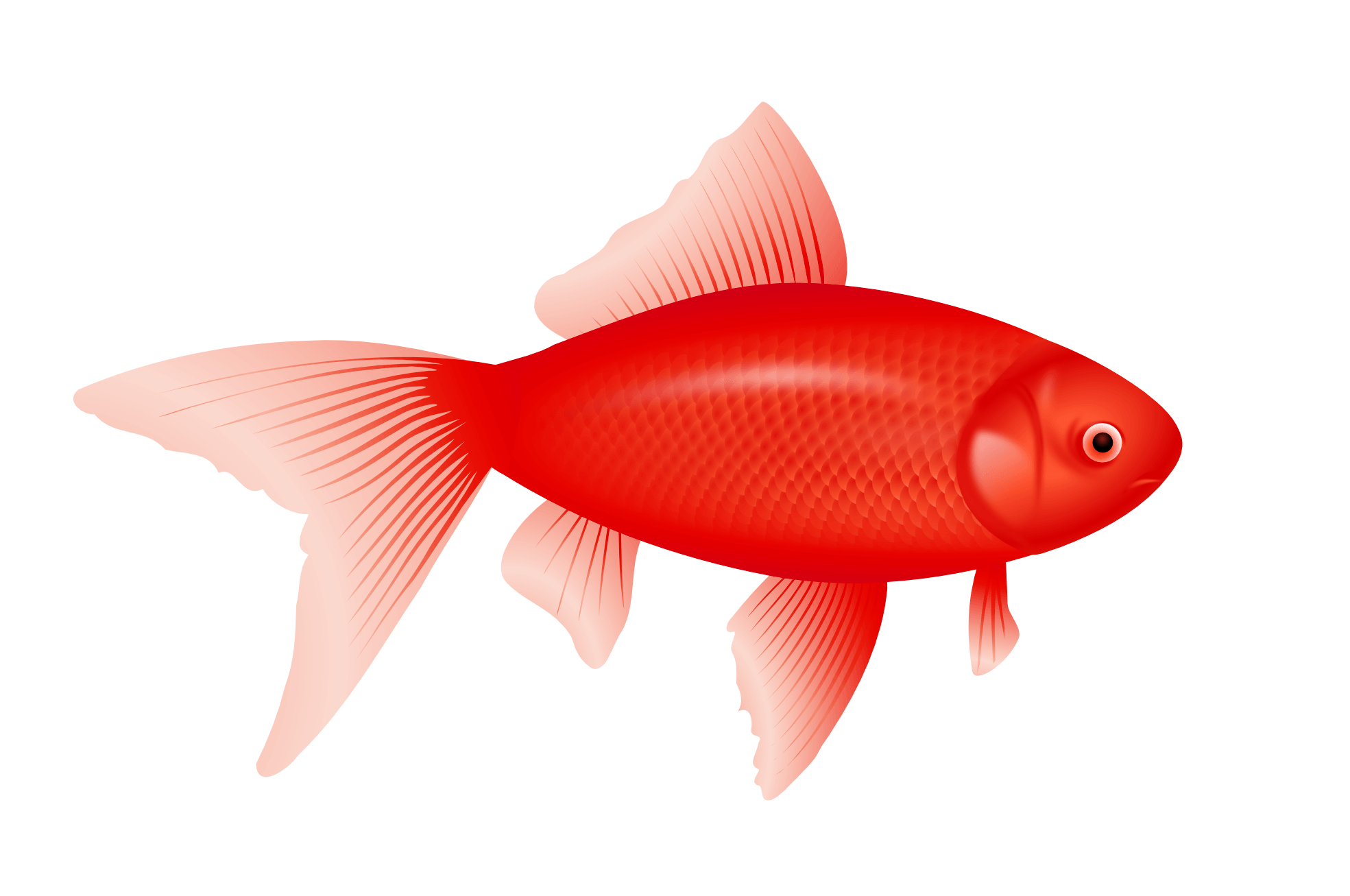 Red Fish Png Free Red Fish Png Transparent Images 62927 Pngio