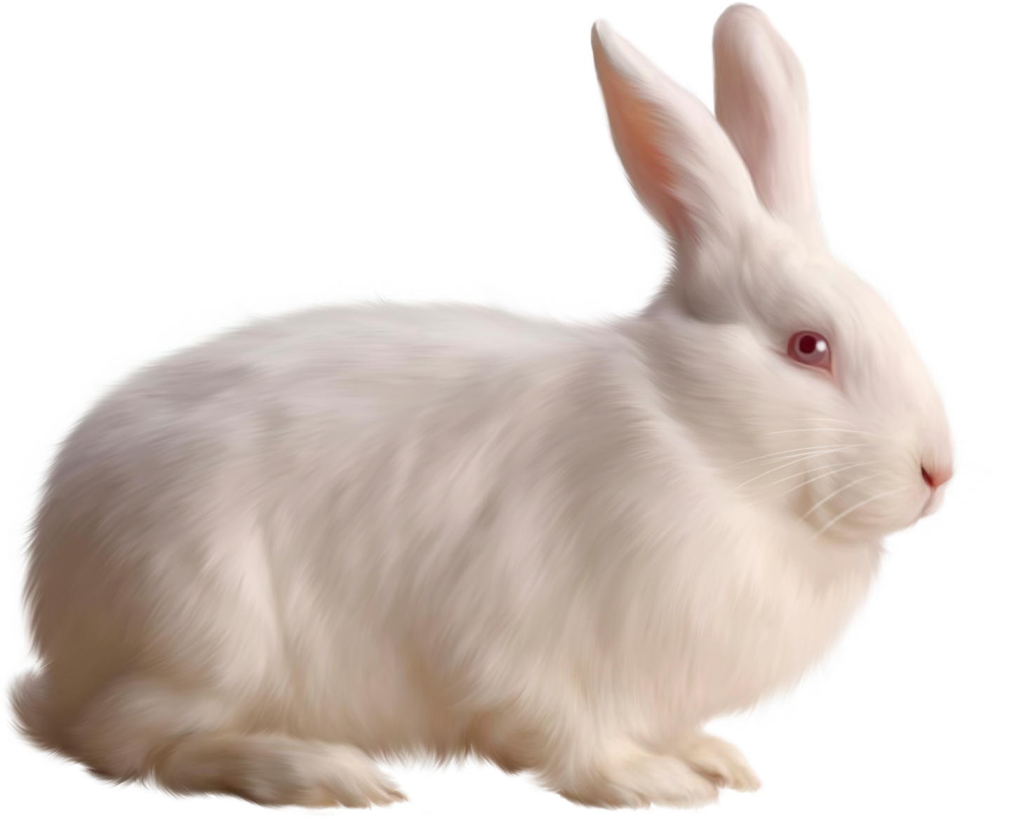 White Rabbit Png - Download Transparent White Bunny Rabbit HQ PNG Image | FreePNGImg