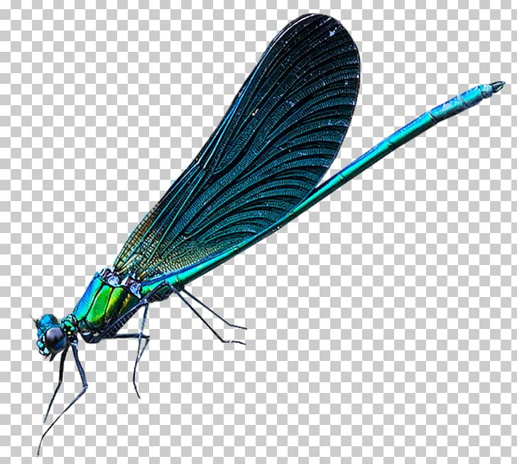 Damselfly Png - Dragonfly Net-winged Insects Damselflies Insect Wing PNG, Clipart ...