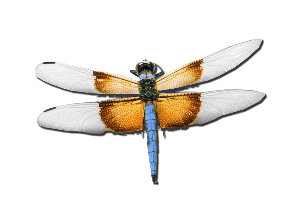Flying Bug Png - dragonfly skimmer bug insect nature flying