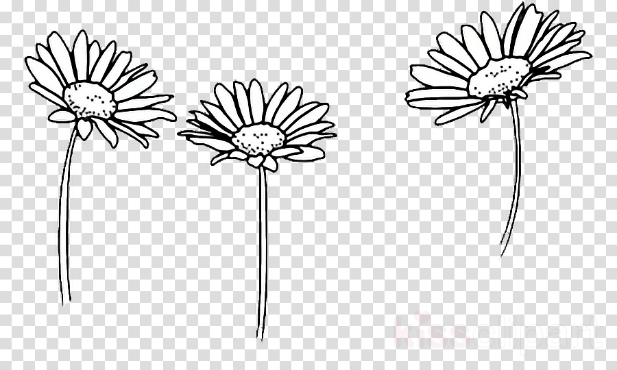 Drawing Flower Sketch Transparent Png 586362 Png Images Pngio