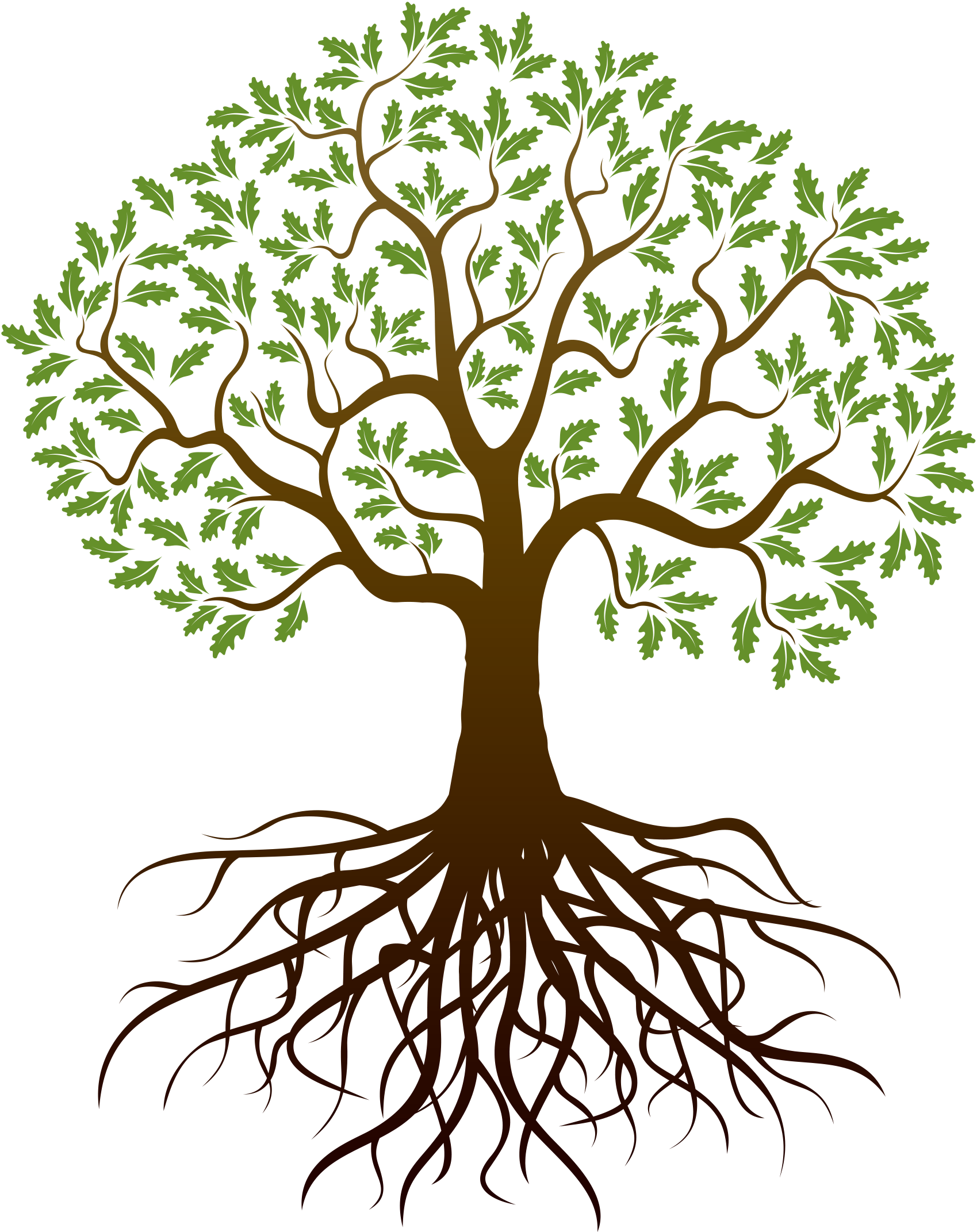 Family Tree Png & Free Family Tree.png Transparent Images ...