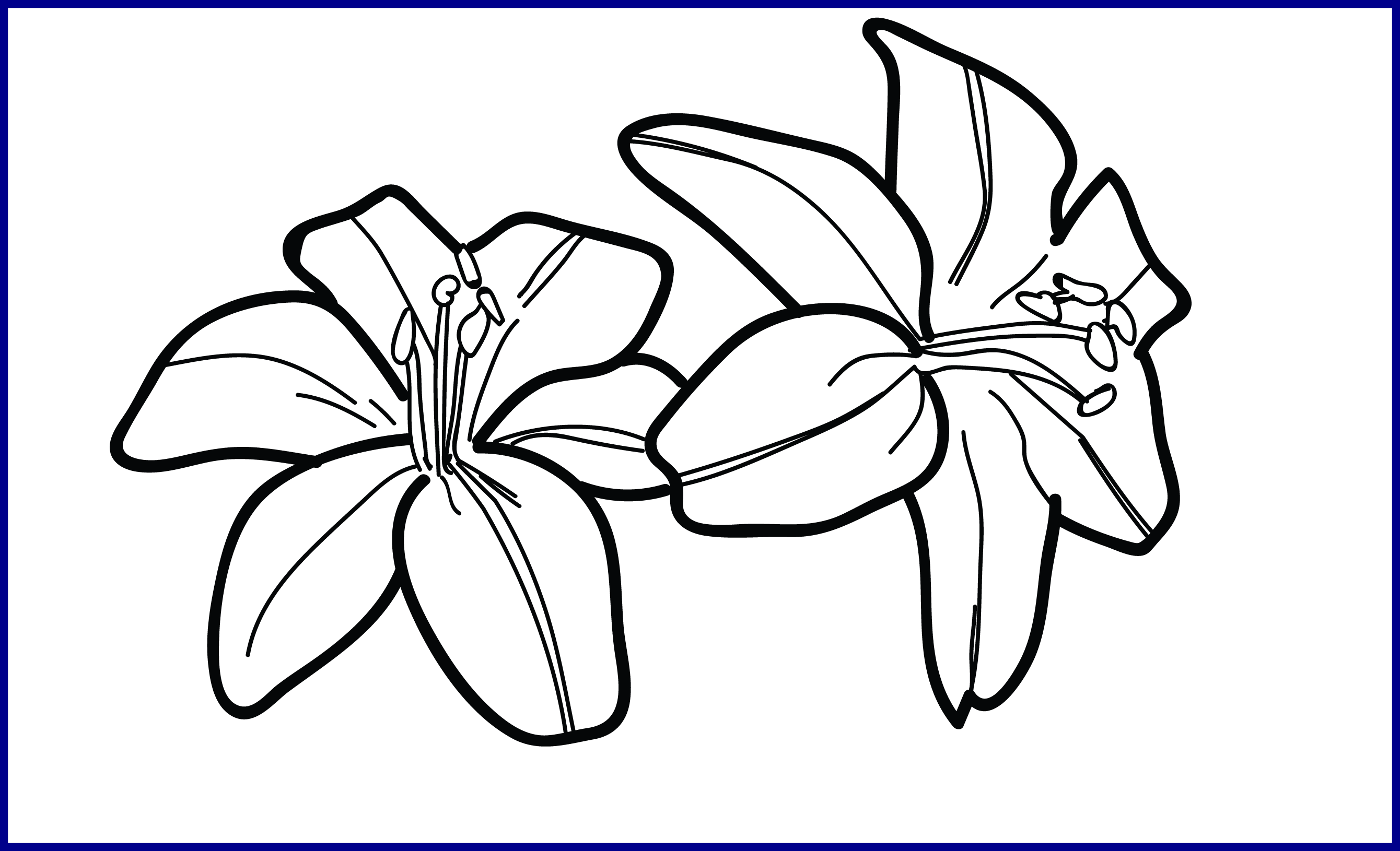 Lily Flower Outline Png Free Lily Flower Outline Png Transparent Images 120284 Pngio