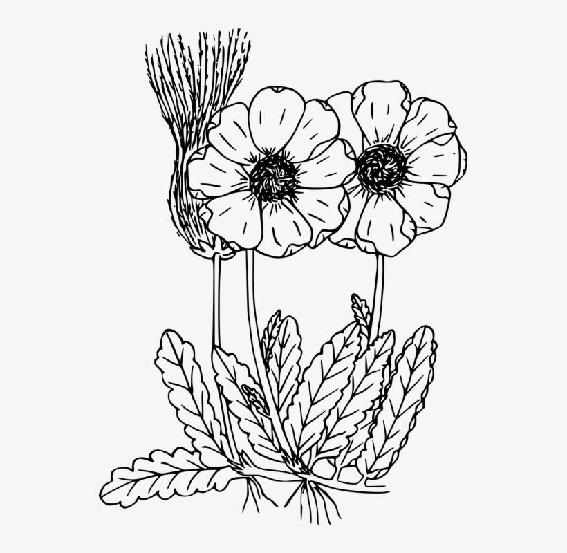 Drawn Wildflower Flowering Plant Wild 1637537 Png Images Pngio