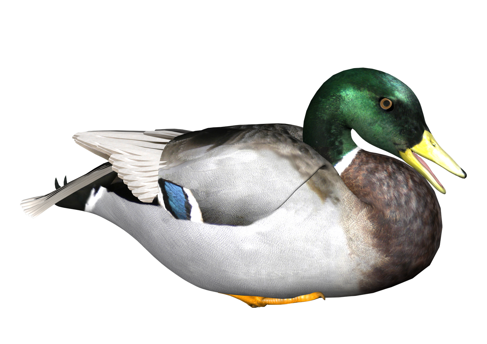 Duck Png - Duck Transparent Background