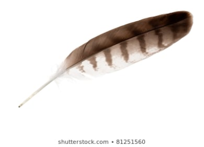 Eagle Feather Png - Eagle Feather Images PNG - DLPNG.com