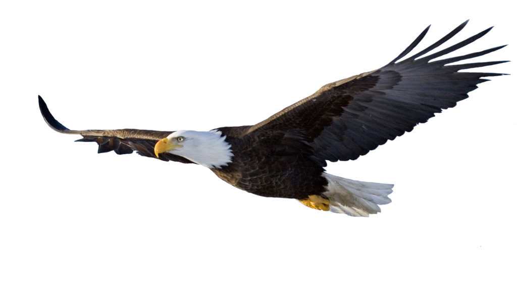 Eagle Png - eagle png x1 by wcclins ...