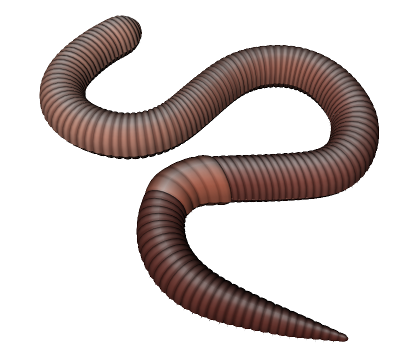 Worms Png - earthworm worm PNG