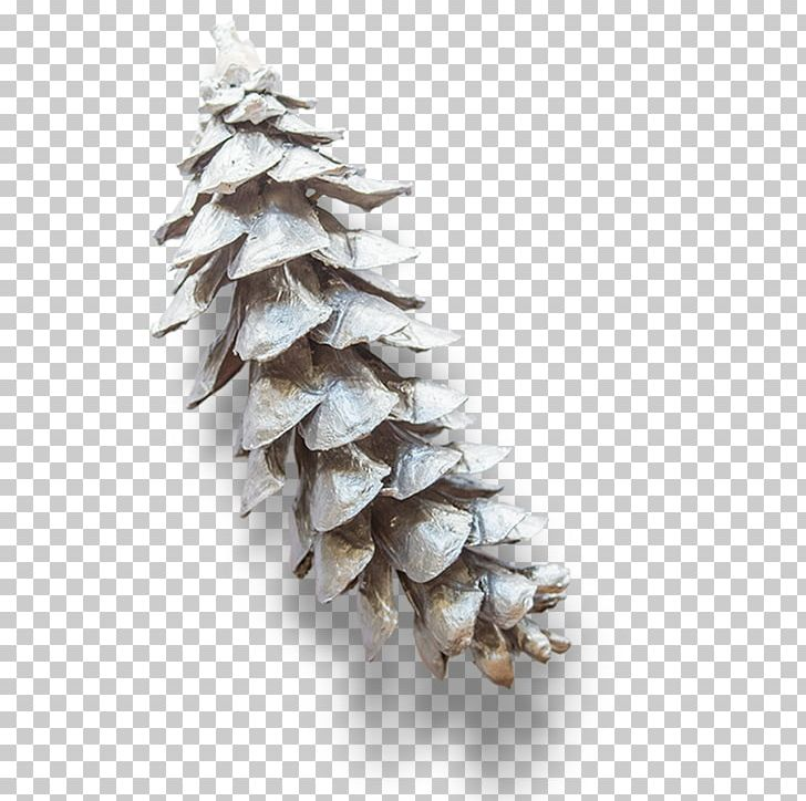 White Pine Png - Eastern White Pine Conifer Cone Branch PNG, Clipart, Buckle ...