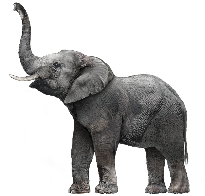 Download Elephant Images Hd Png Png Gif Base Vintage png asian elephant animal, remix from artworks by charles dessalines d'orbigny. download elephant images hd png png