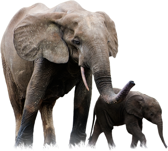 Elephants Png Images Free Download Elep 915222 Png