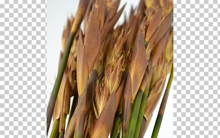 Dinkel Wheat Png - Emmer Spelt Common Wheat PNG, Clipart, Cereal, Commodity, Common ...