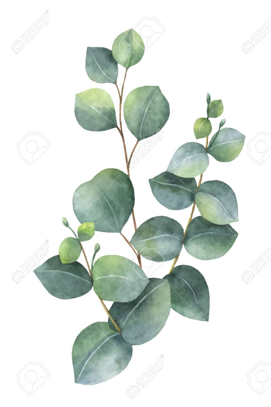 Eucalyptus Leaves Png - eucalyptus leaf png - AbeonCliparts | Cliparts & Vectors for free 2019