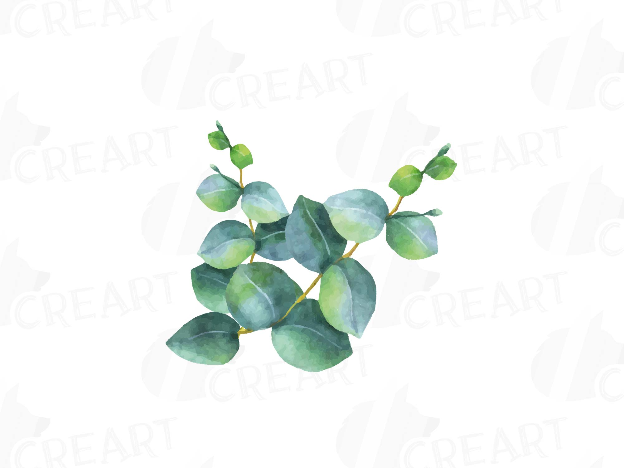 Eucalyptus Leaves And Branches Watercolo 32   PNG Images   PNGio
