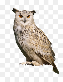 Png Images Of Owls - Eurasian eagle-owl Bird Snowy owl Great Horned Owl - free png