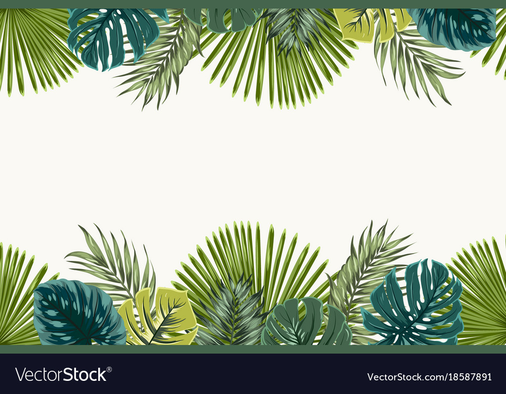 Palm Leaves Border Free Palm Leaves Border Png Transparent Images 50940 Pngio ***free shipping*** on all sample orders and all us orders $99 and up. pngio com