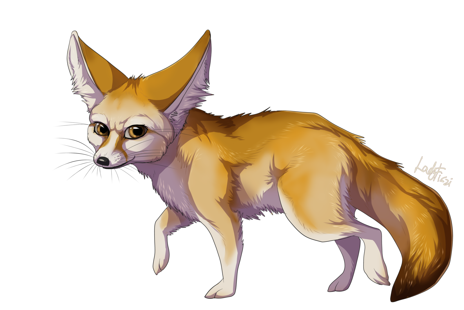 Fox Png - Fennec Fox PNG Transparent Image
