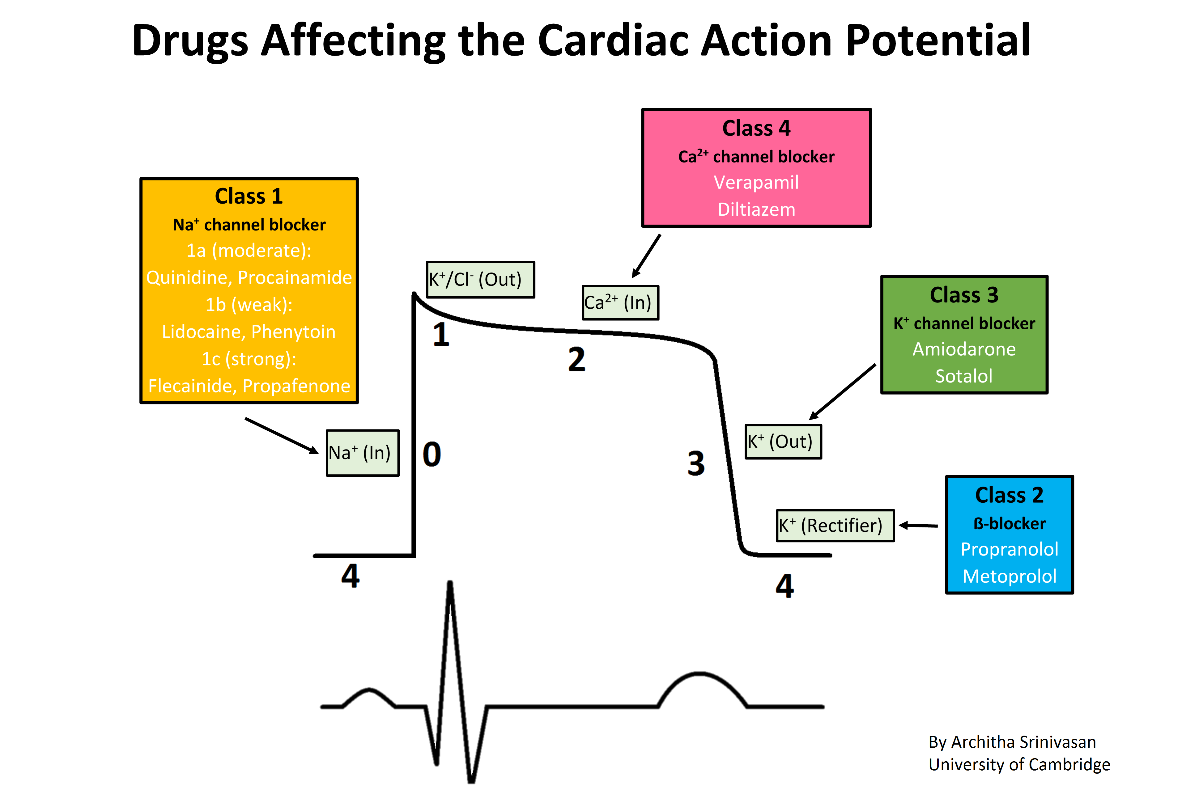 Action Potential Png - File:Cardiac action potential.png - Wikimedia Commons