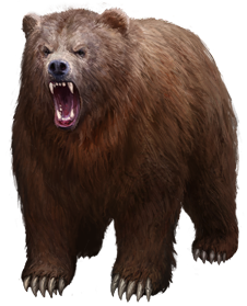 Bear Png - File:Grizzly Bear.png