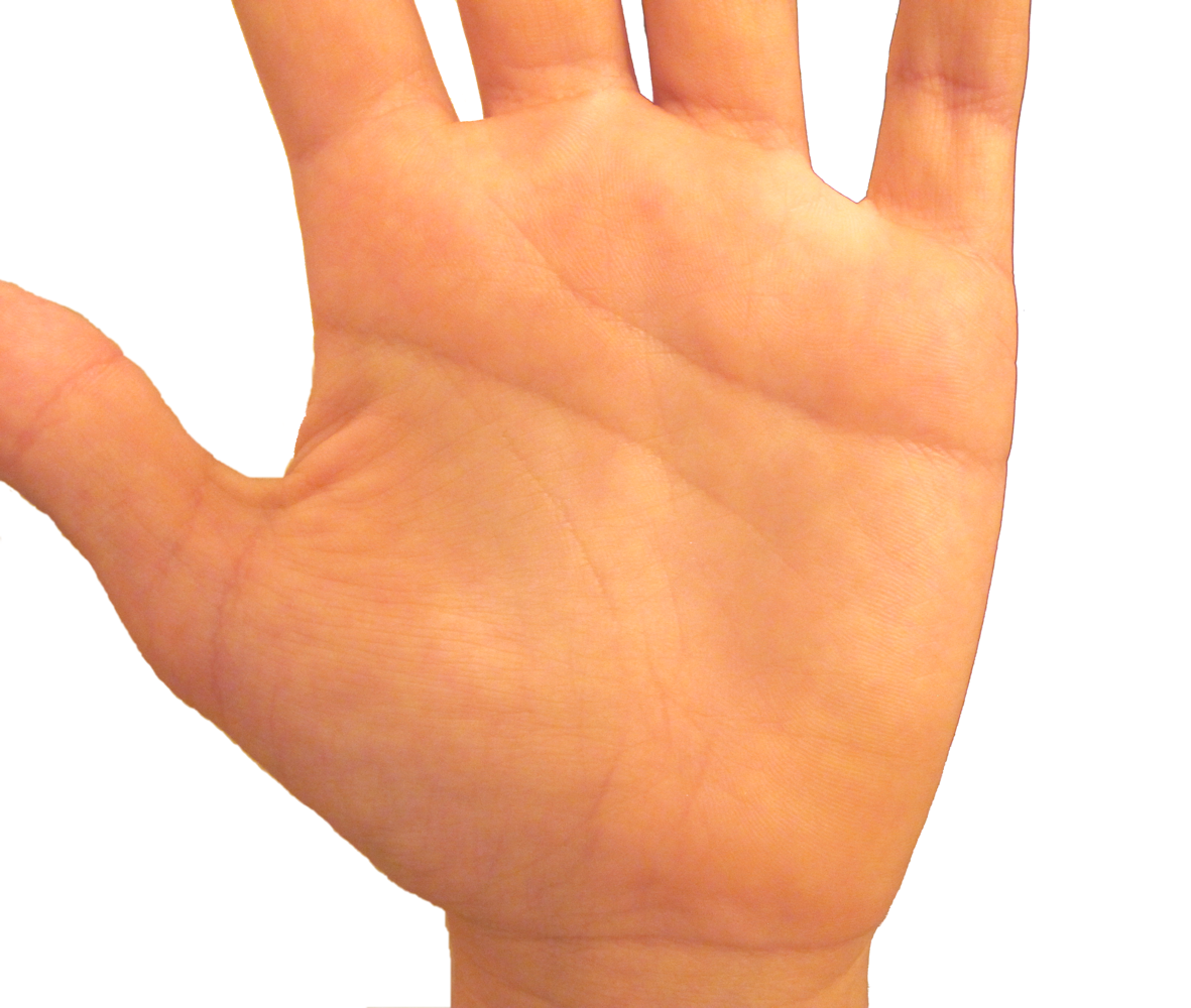 File Human Palm Png 91872 Png Images Pngio Download hand palm png for. file human palm png 91872 png images