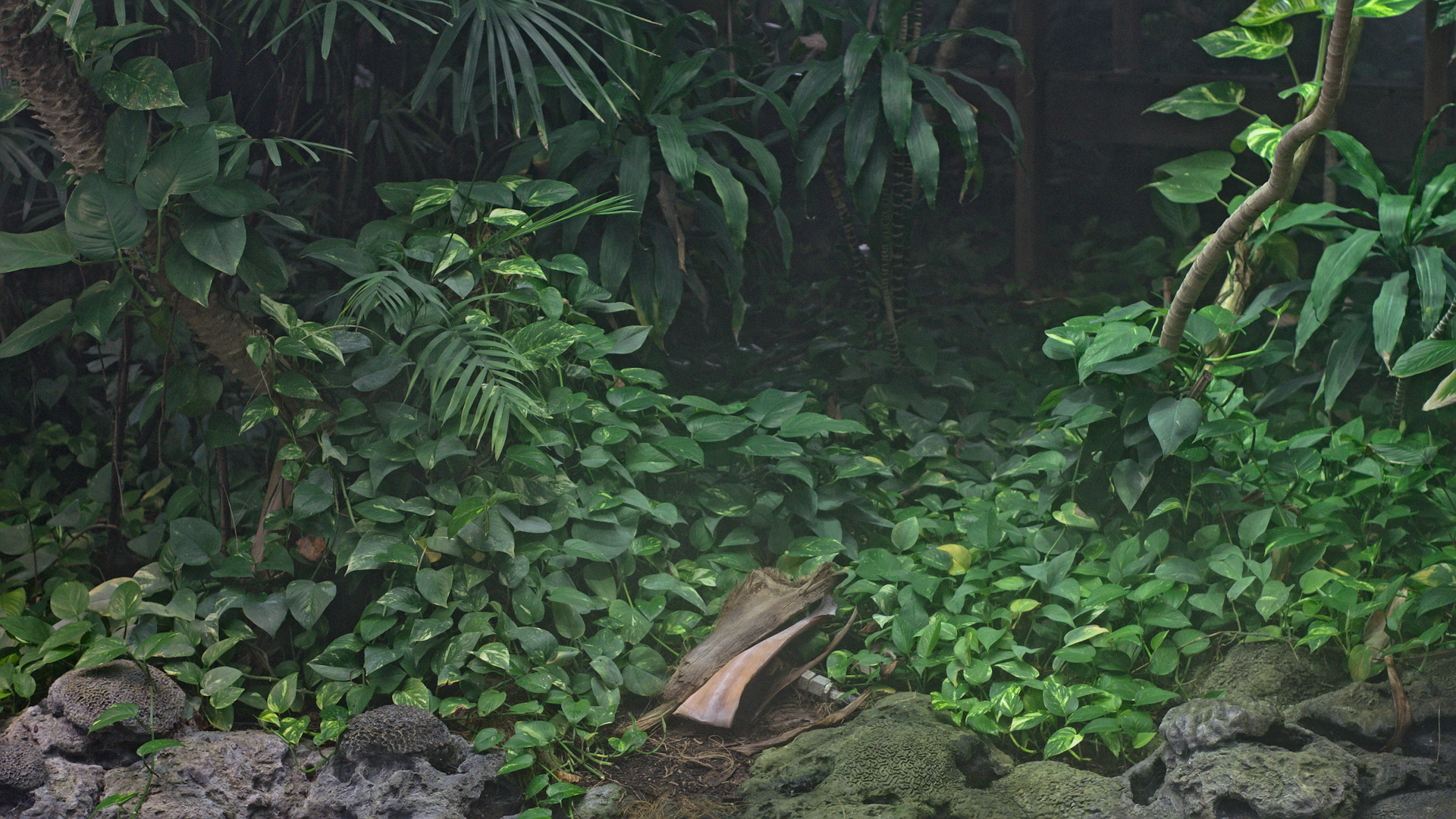 Png Of Jungle - File:Jungle (38741268965).png - Wikimedia Commons