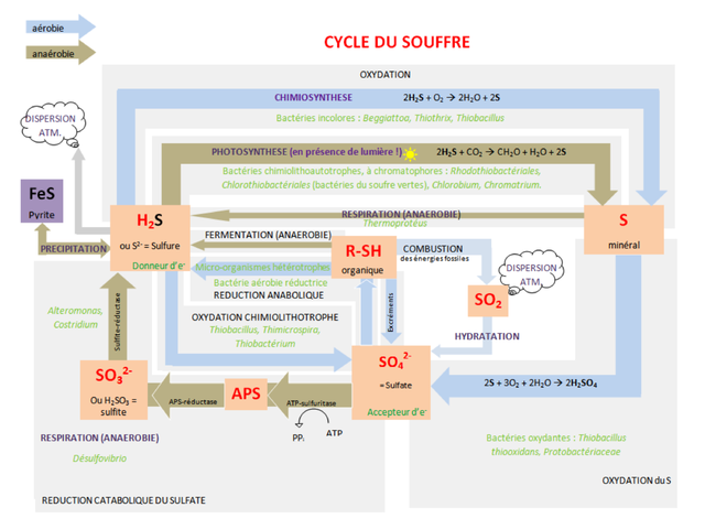 Sulfur Cycle Png - File:Sulfur cycle.png - Wikimedia Commons
